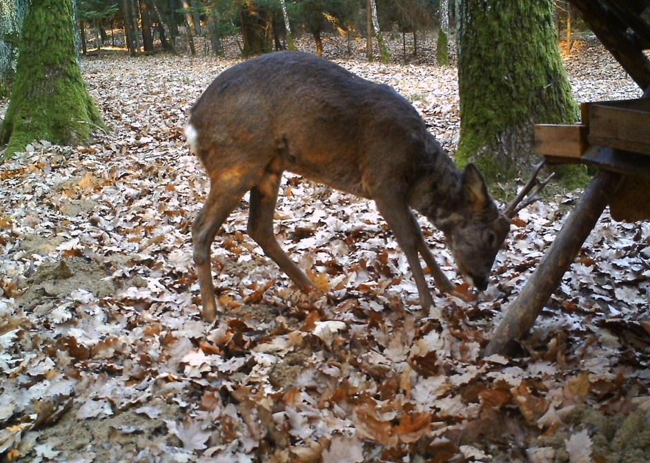 Vollmond Jagd Entfernungsmesser : Jagderlebnis u seite jagd und natur