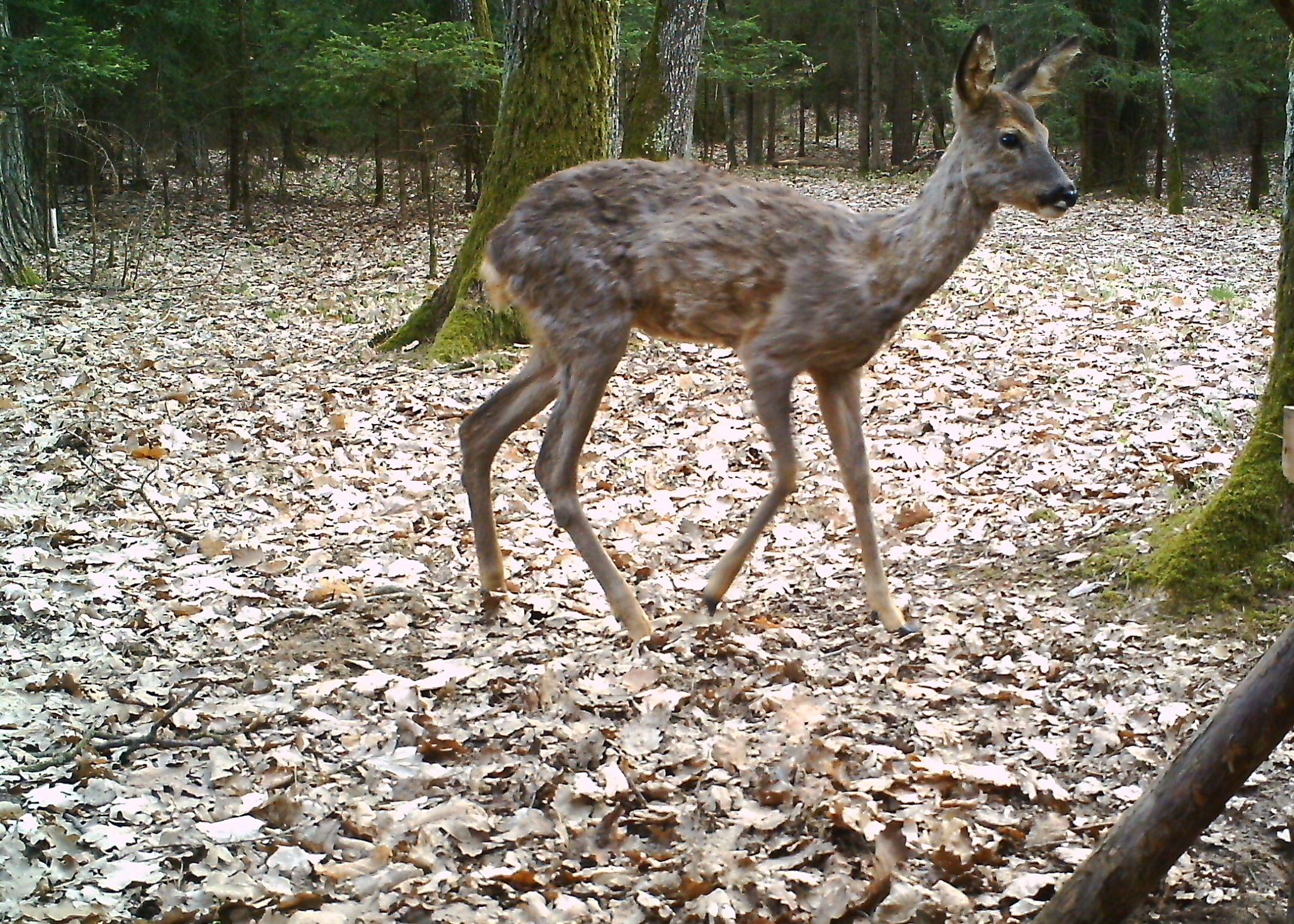 Vollmond Jagd Entfernungsmesser : Jagen u jagd und natur